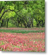 Willows,indian Paintbrush Make For A Colorful Palette. Metal Print