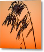 Wilting Sunset Metal Print