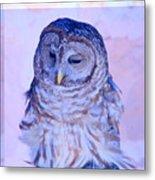 Wind Blown Owl  Metal Print
