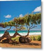 Wind Blown Tree Metal Print by Brian Harig