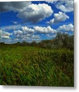 Wind In The Cattails Metal Print