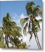 Wind Though The Trees Metal Print
