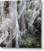 Wind Through The Cypress Trees Metal Print