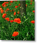 Windblown Poppies Metal Print