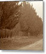 Windbreak, Central Iran Metal Print