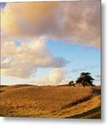 Winding Road Leads To A Lone Tree Metal Print