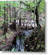 Winding Sopchoppy River Metal Print