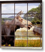 Window - Moosehead Lake Metal Print