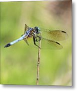 Windswept Dragonfly Metal Print