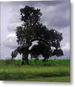 Windswept Tree Metal Print
