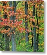 Windy Day Autumn Colors Metal Print