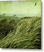 Windy Day On The Nut Metal Print