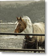 Windy In Mane Metal Print