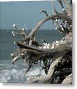 Windy Sea Metal Print
