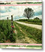 Wine And Roses. Brandini Winery Metal Print