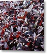 Wine Colored Plants,  Metal Print