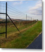 Wine Fields Metal Print