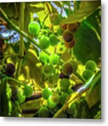 Wine On The Vine Metal Print