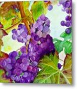 Wine Vine Metal Print
