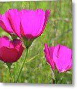 Winecup Flowers In Sunlight Metal Print