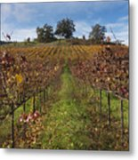 Wineland Metal Print by Kenneth Hadlock