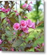Wines And Rose Weigela Metal Print