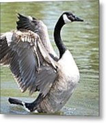 Wing Flapping Metal Print