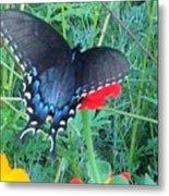 Wing Spread Butterfly Metal Print