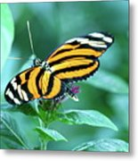 Wing Wonders Metal Print