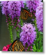 Winged Beauties Metal Print