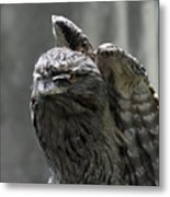 Wings Above A Tawny Frogmouth That Looks Interesting Metal Print