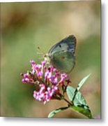 Wings And Petals Metal Print