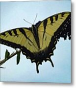 Wings Are Perfect Match - Eastern Tiger Swallowtail Metal Print