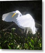 Wings Of An Angel Metal Print