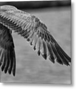 Wings Over Water Beach Pictures Black And White Seagull Metal Print