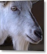 Winsome Goat Metal Print