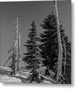 Winter Alpine Trees, Mount Rainier National Park, Washington, 2016 Metal Print