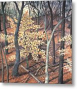 Winter Beech Metal Print