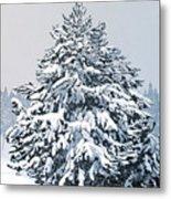 Winter Blanket Metal Print
