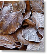 Winter Brown Leaves Powdered With Frost Metal Print