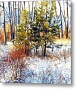 Winter Calm Metal Print