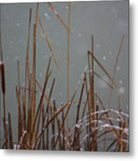 Winter Cat Tail Metal Print