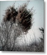 Winter Cedar Metal Print