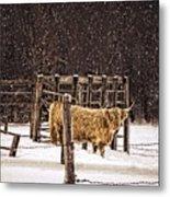 Winter Coat Metal Print