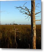 Winter Cypress Metal Print