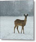 Winter Deer Walk Metal Print