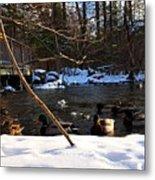 Winter Ducks Metal Print
