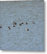 Winter Ducks Swimming Away  Metal Print