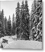 Winter Forest Journey Metal Print