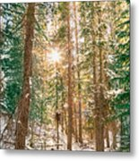Winter Forest Sunshine Metal Print